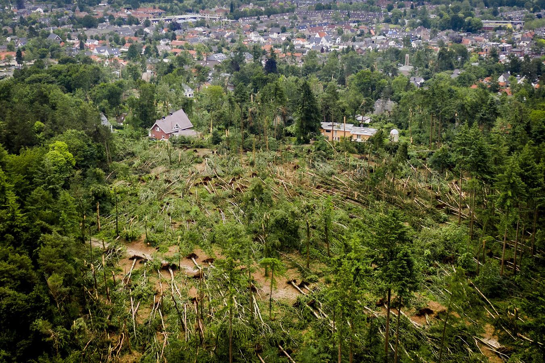 Honderden omgewaaide bomen in natuurgebied Boswachterij Leersum, een dag na de hevige storm. Meteorologen leggen uit wat er precies gebeurd is.