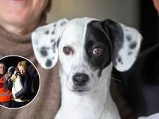 Hondje Paco (1) legde het spoorverkeer stil bij Ede: 'Gelukkig dook een vriendin er bovenop'