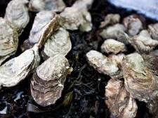 L'huître fait avancer la recherche contre le cancer