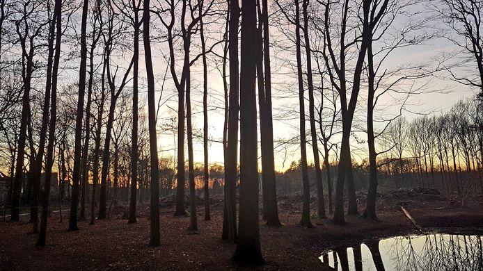 Het Ulvenhoutse Bos