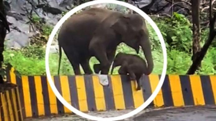 Une mère éléphant porte secours à son bébé avec sa trompe.