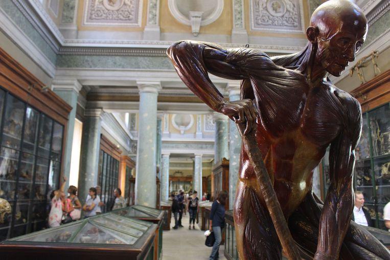Musée et conservatoire d'anatomie Beeld RV