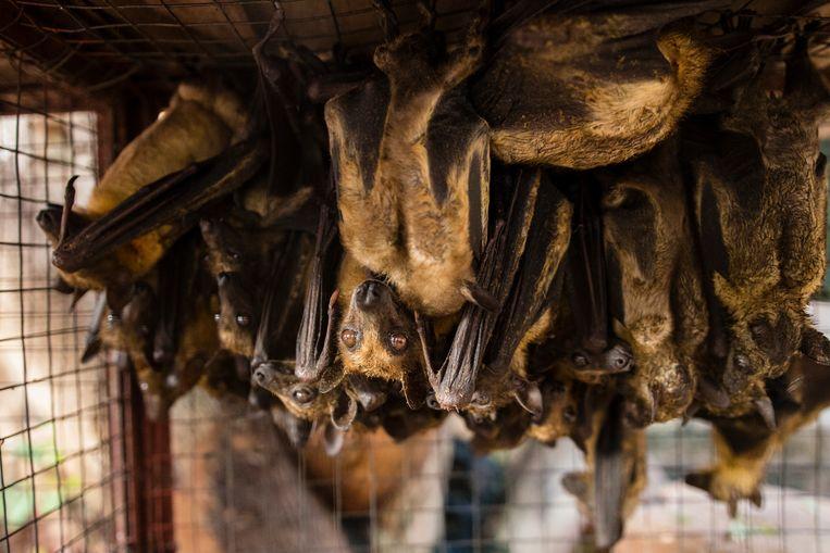 Op elkaar gepakte vleermuizen in een kooi. Beeld World Animal Protection