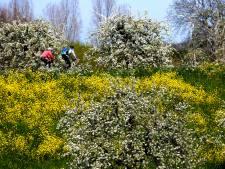 Nog even genieten van de fleurige bloesembomen in de regio
