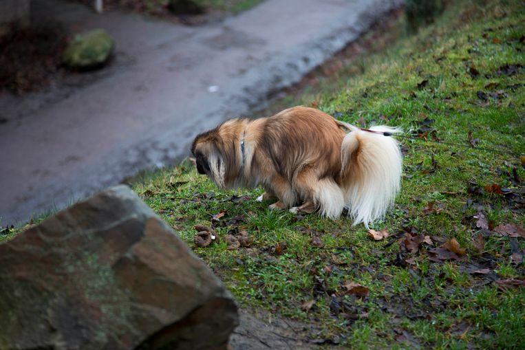 Op een dag liet Willem (62) in zijn onderbroek de hond uit. Hij was helemaal de kluts kwijt door alle zorgen die hij had over een terugvordering van zijn uitkering. Beeld Werry Crone