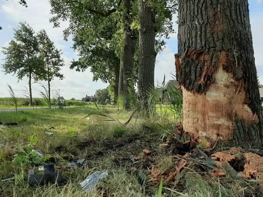 De boom waar het ongeluk gebeurde