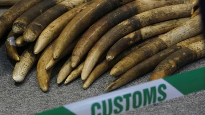 Aantal gestroopte olifanten blijft verontrustend hoog