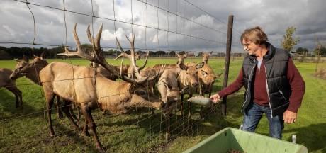 5000 kilo eikels ingezameld voor herten op hertenhoeve