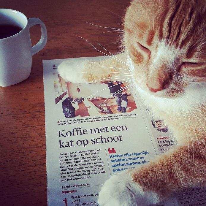 Ook katten lezen weleens de krant.