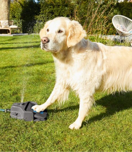 Lidl va commercialiser une fontaine à eau pour votre chien