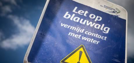 Blauwalg in water bij Vakantiepark Eiland van Maurik