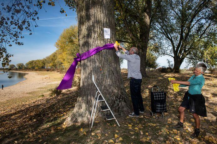 De bomen die gemarkeerd zijn om gekapt te worden, krijgen een strik.