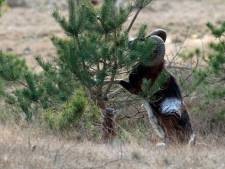 'Als moeflon inheems wordt, wacht wolf de kogel op Hoge Veluwe'