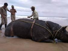 Park in angst: nieuwe tsunami kan einde Javaanse neushoorn zijn