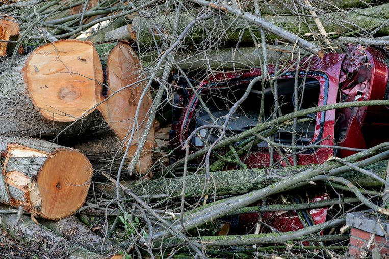 Omgevallen bomen verpletterden een auto in Brussel. Beeld EPA