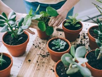 """Dit zijn de populairste kamerplanten van 2021: """"Mensen zijn verzot op bladeren met een vleugje roze of wit"""""""