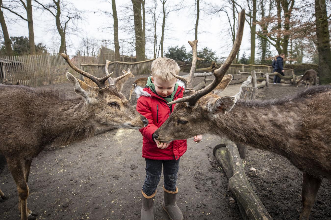 Als een echte dierenverzorger voert de 3-jarige Scott uit Oldenzaal de sikaherten in het Tierpark.