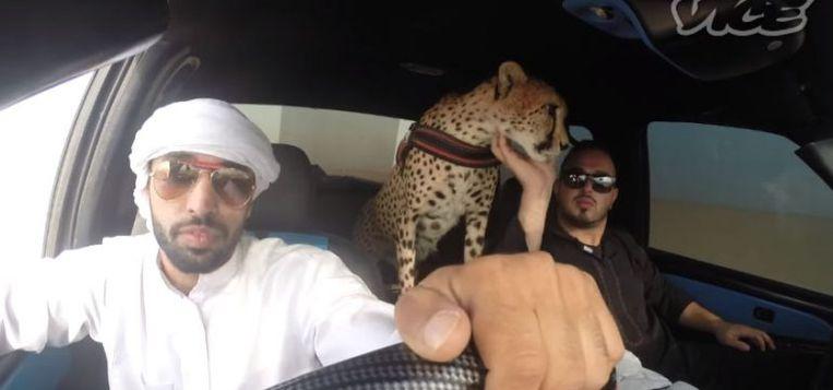 Rijke inwoners van de Golfstaten pronken niet zelden met 'hun' wilde dieren.  Beeld rv
