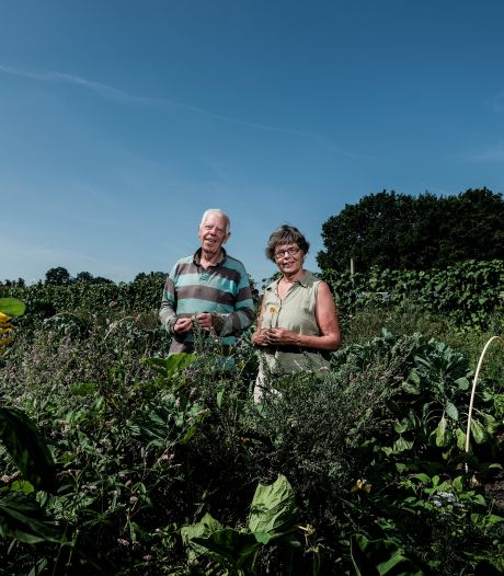 Verse bonen, sla, komkommers en paprika's: Janneke en Theo kunnen van hun eigen oogst leven