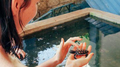 Schildpadden hoeden in Sri Lanka of lesgeven in Vietnam? Dit zijn de reistrends van 2020