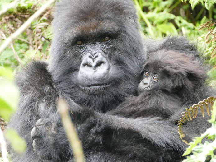 Dian Fossey Gorilla Fonds