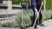 Schepen De Donder (Leefbaarder Zele) maakt goot onkruidvrij na klacht op sociale media