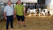 Koeien kijken op Dag van de Landbouw in Herenthout