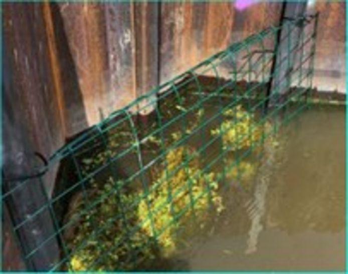De plantenbakken in het water langs de damwanden.