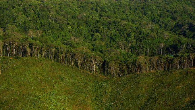Alarmerend: tropische bossen stoten nu meer CO2 uit dan ze opnemen