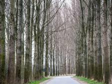 Bomenbelang doet beroep op gemeenteraad