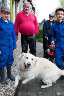 Hartverwarmend! Vrijwilligers melden zich massaal om hond van gehandicapte Michel (66) uit te laten
