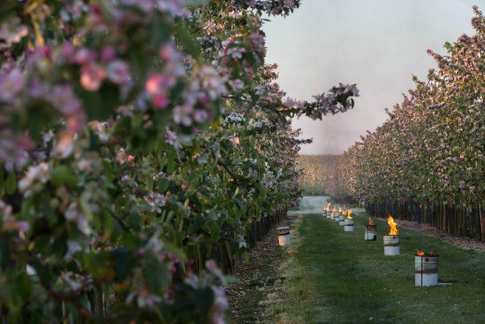 Ook vannacht houden fruitboeren zich klaar om vuurpotten te zetten tegen de nachtvorst en zo de bloesems te beschermen (archiefbeeld).