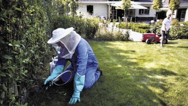 Een bestrijder pakt een wespennest aan in een tuin in Rhenen. Door het zachte voorjaar zijn er veel wespen deze zomer. (KOEN VERHEIJDEN) Beeld