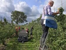 Billenknijpen voor Betuwse fruittelers door onstuimig lenteweer: 'Ons bed uit om te beregenen'