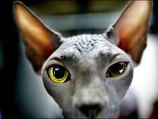 Nijmeegse arts waarschuwt: niet allergisch voor naakthonden en -katten? Dat is dus een fabel
