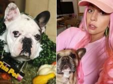 Onbekende vrouw geeft gestolen honden van Lady Gaga af bij politie van Los Angeles