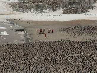 """Verborgen """"superkolonie"""" van anderhalf miljoen pinguïns ontdekt op Antarctica"""