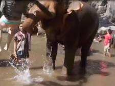 Olifant slingert toerist paar meter door de lucht in Thailand