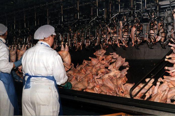 Ook arbeidsmigranten in de pluimveesector moeten betaald krijgen via de cao, heeft de Hoge Raad bepaald.