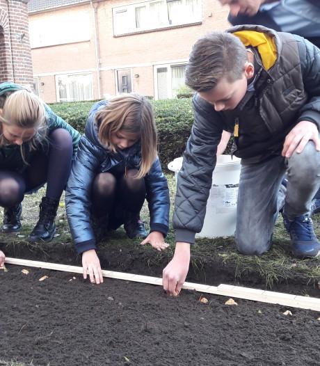 Tulpen in Zeeland ogen in mei als vrijheidsvlammetjes