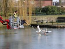 Brandweer Oldenzaal redt gans van glad ijs