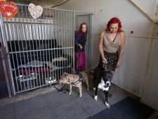 Hondenopvang Stella in Tollebeek durft weer naar de toekomst te kijken