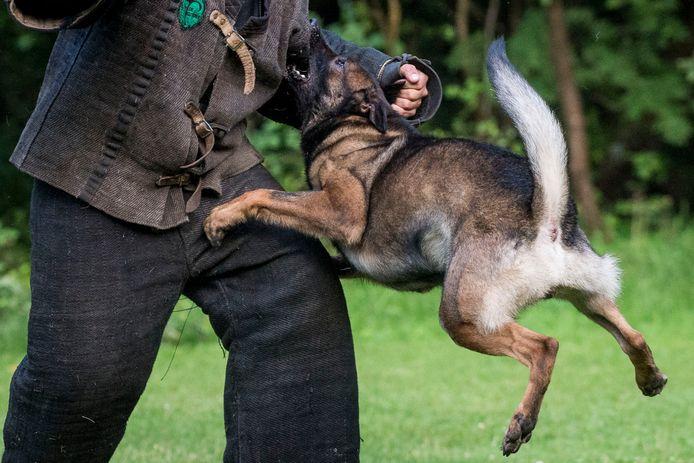 Trainingen op het oefenterrein van Politiehonden Dressuur Club De Doorzetters in Wierden.