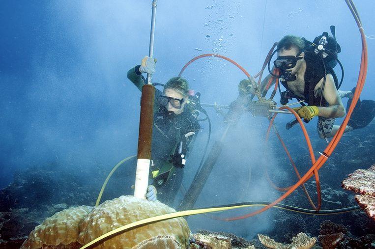 Kim Cobb (l) boort stalen uit een koraalrif.  Beeld RV