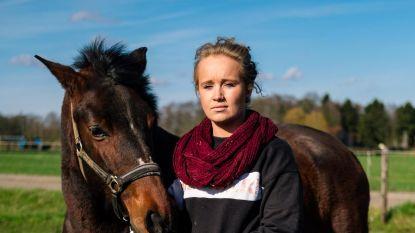 """Paardenoorlog na foutgelopen deal: """"500 euro voor wie mijn merrie vindt"""""""