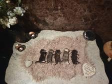 Woede en verdriet om doodgeslagen kittens in Hengelo: 'Ze zijn vermoord en als afval gedumpt'