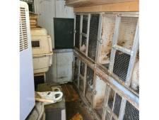 Politie neemt in één woning 48 verwaarloosde dieren in beslag