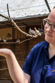 Roos leert vogels die zwaargewond raakten bij valwind weer vliegen: 'De verwondingen waren gruwelijk'