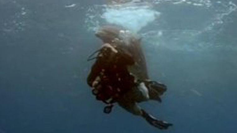 Seks met een dolfijn video