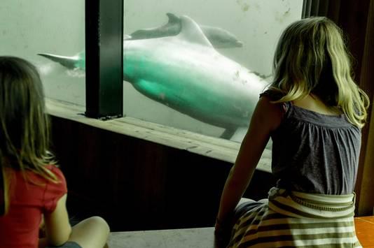 Kinderen genieten van langszwemmende dolfijnen in het Dolfinarium